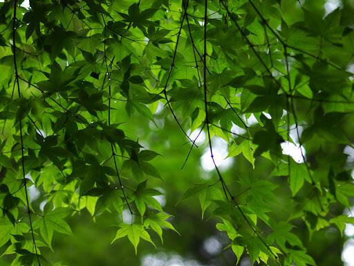 incantesimo d'amore foglie d'albero